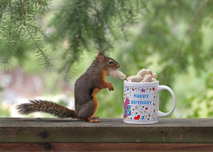 Happy Birthday Squirrel Greeting Card For Sale By Peggy Collins