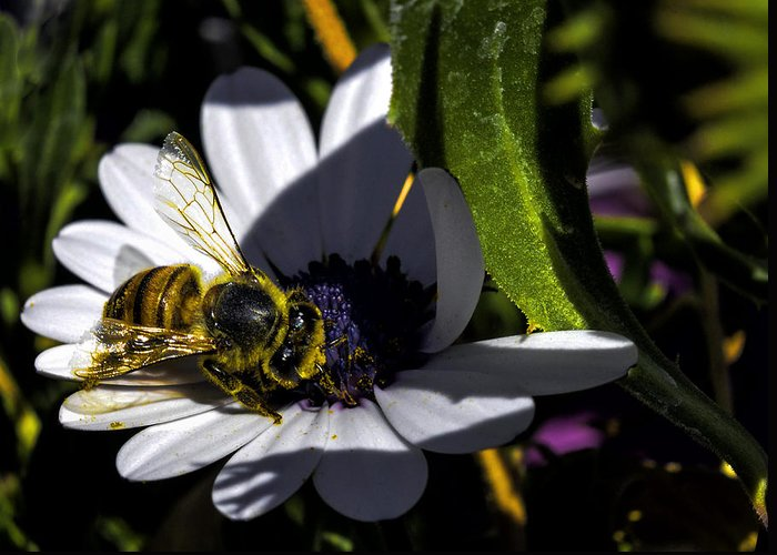 Arizona Greeting Card featuring the photograph Happy Honey Bee by George Davidson