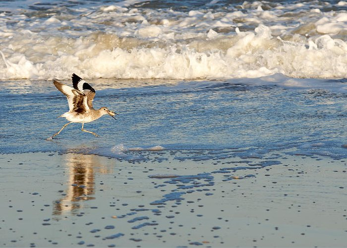Surf Greeting Card featuring the photograph Happy Shorebird by David Kay