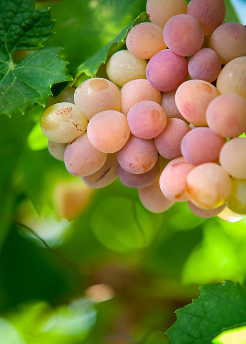 Grape Greeting Card featuring the photograph Harvest Time. Sunny Grapes Viii by Jenny Rainbow