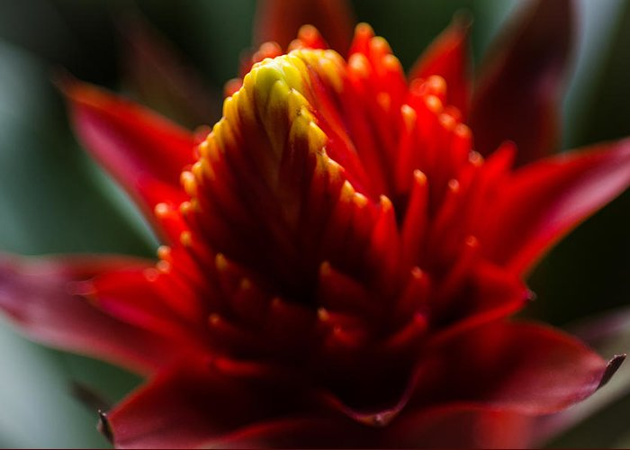 Flower Greeting Card featuring the photograph Hawaii Flower Macro by William Murphy