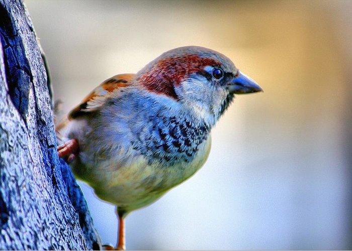 Hawaii Greeting Card featuring the photograph Hawaiian Sparrow by Bob Kinnison