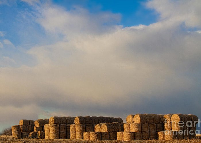 Hay Greeting Card featuring the photograph Hay Bales by James BO Insogna