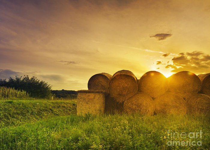 Hay Greeting Card featuring the pyrography Hay Bales by Jelena Jovanovic