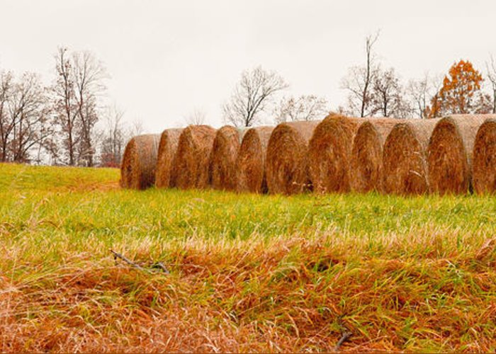 Farming Greeting Card featuring the photograph Hay Bales by Melinda Pettery