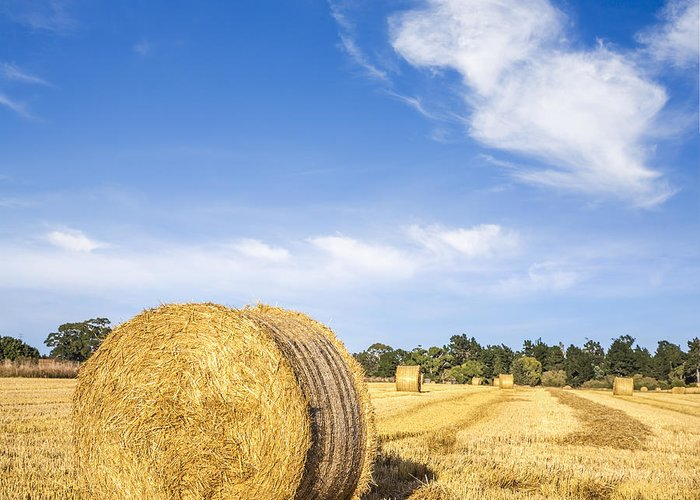 Bales Greeting Card featuring the photograph Hay Bales Under Deep Blue Summer Sky by Colin and Linda McKie