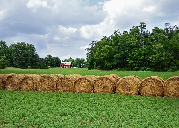 Hay Greeting Card featuring the photograph Hay Day by Steven Michael