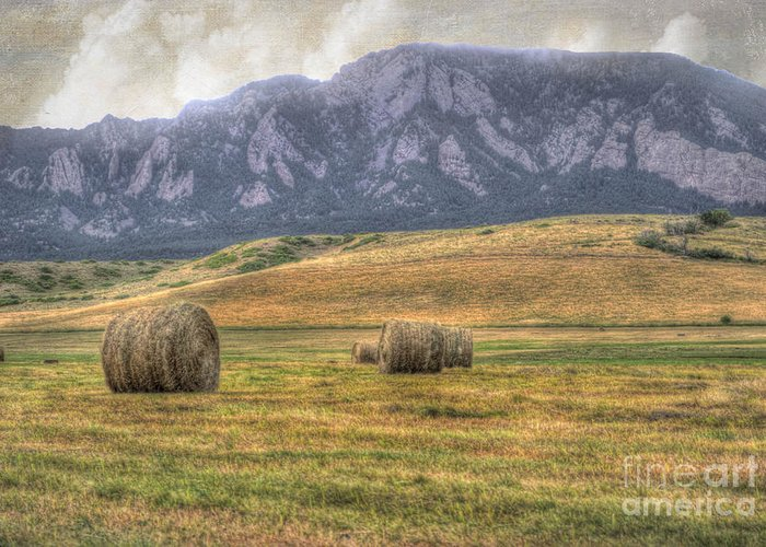Agriculture Greeting Card featuring the photograph Hay There by Juli Scalzi