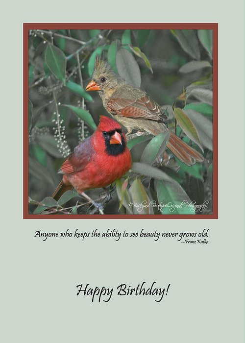 Birds Greeting Card featuring the photograph Hbd01 by Helen Ellis
