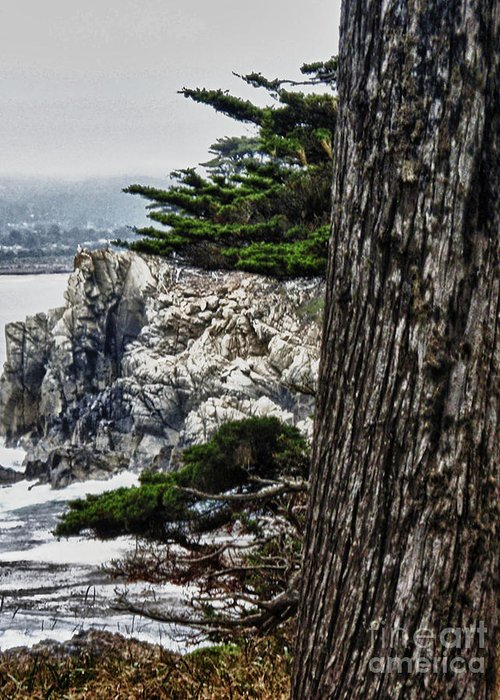 Point Lobos State Mixed Media Greeting Cards