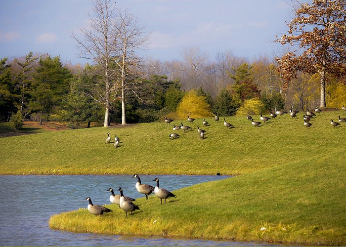 Bird Migration Greeting Card featuring the photograph Heading South by Julie Palencia