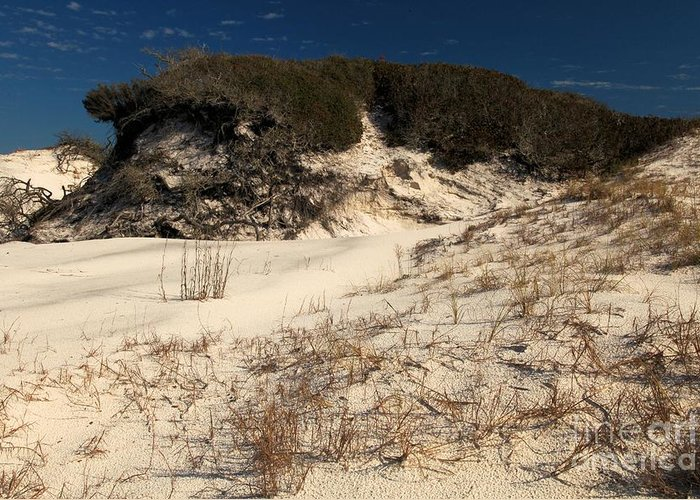 St Joseph Peninsula State Park Greeting Card featuring the photograph Healthy Dunes by Adam Jewell