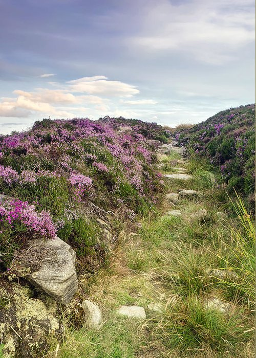 Calm Greeting Card featuring the photograph Heather On Simonside Hills by Chris Frost