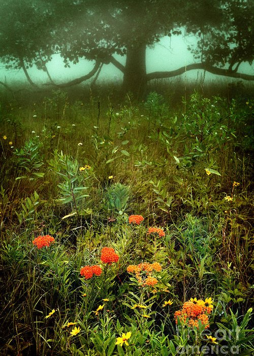 North Carolina Greeting Card featuring the photograph Heaven In The Gloom I - Blue Ridge Parkway by Dan Carmichael