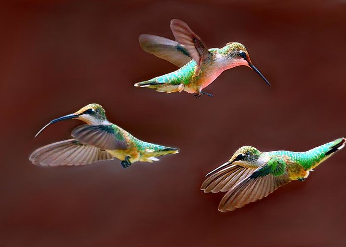 Hummingbirds Greeting Card featuring the photograph Heavenly Birds by Elizabeth Winter