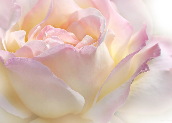Rose Greeting Card featuring the photograph Heaven's Pink Rose Flower by Jennie Marie Schell