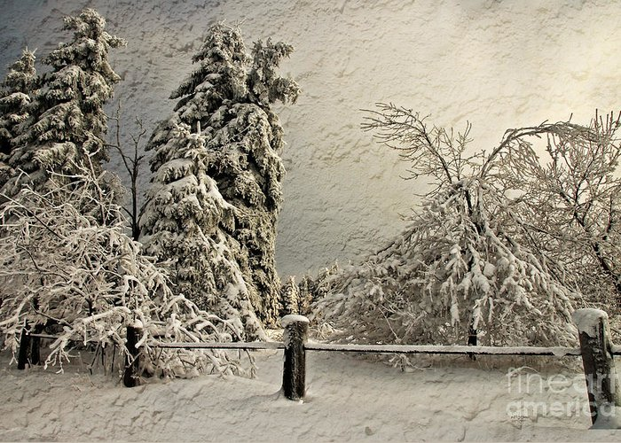 White Christmas Greeting Card featuring the photograph Heavy Laden Blizzard by Lois Bryan