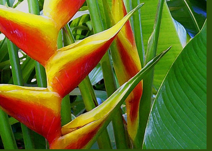 Heliconia Greeting Card featuring the photograph Heliconia Bihai Kamehameha by James Temple