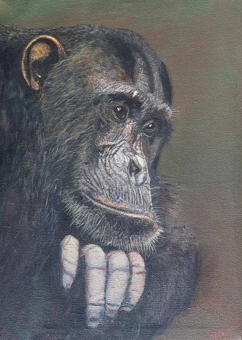 Chimpanzee Greeting Card featuring the painting Hello Beautiful by Cecile Fortier