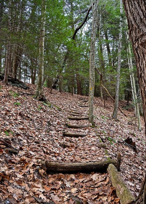 Pennsylvania Greeting Card featuring the photograph Hemlock Stairway by Jake Donaldson