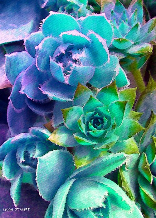 Hens And Chicks Photography Greeting Card featuring the photograph Hens And Chicks Series - Deck Blues by Moon Stumpp