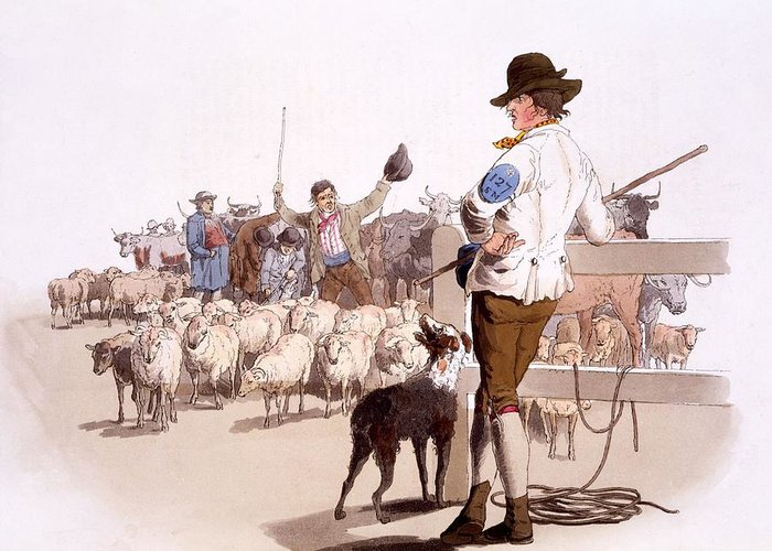 Herdsmen Greeting Card featuring the painting Herdsmen Of Sheep And Cattle, From The by William Henry Pyne