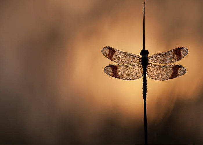 Dragonfly Greeting Card featuring the photograph Here Comes The Sun by Daan De Vos