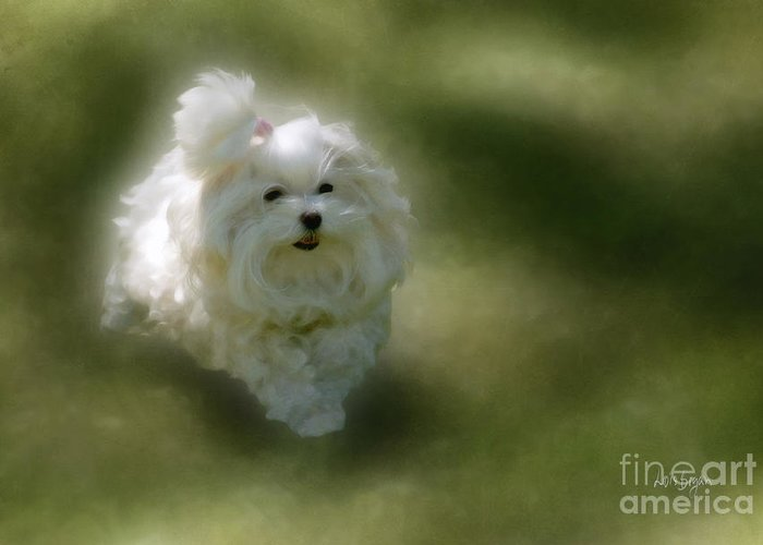 Dogs Greeting Card featuring the photograph Here She Comes by Lois Bryan