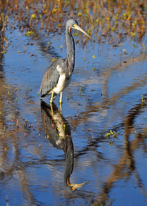 Beach Greeting Card featuring the photograph Heron And Reflection In Jekyll Island's Marsh by Bruce Gourley