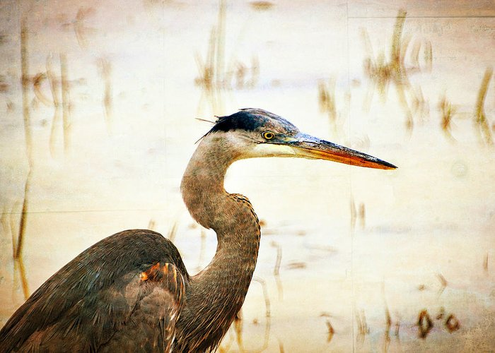 Great Blue Heron Greeting Card featuring the photograph Heron by Marty Koch