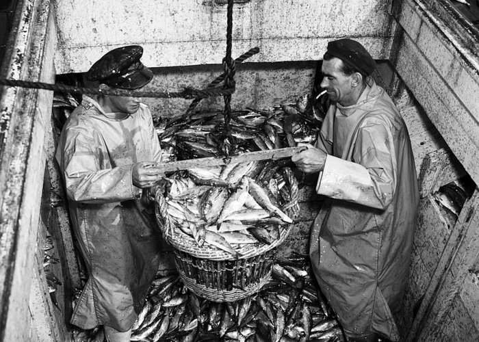 Fishing Greeting Card featuring the photograph Herring Fishing Howth 1955 by Irish Photo Archive