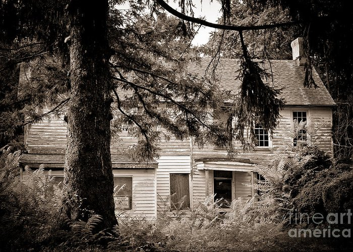 Abandoned Greeting Card featuring the photograph Hidden Behind The Pines by Colleen Kammerer