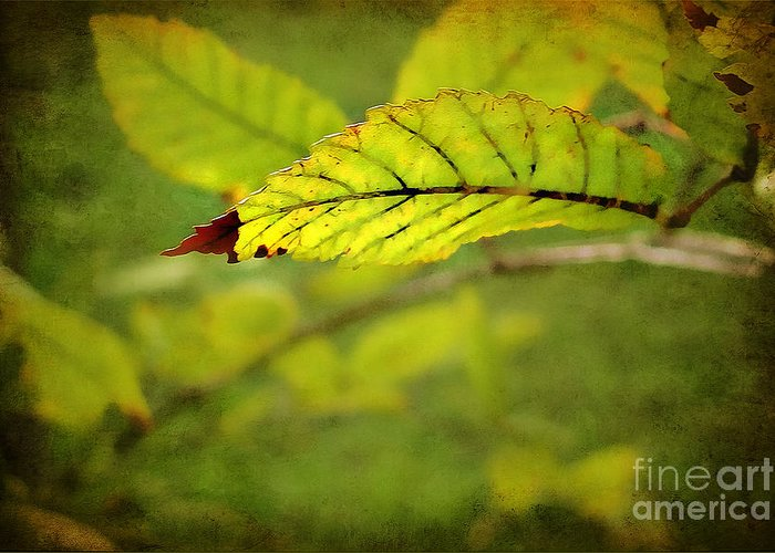 Leaf Greeting Card featuring the photograph Hint Of Autumn by Judi Bagwell