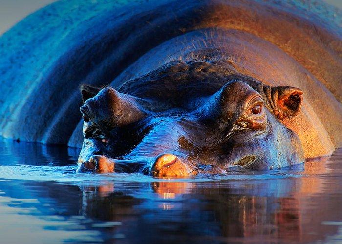 Hippopotamus Greeting Cards