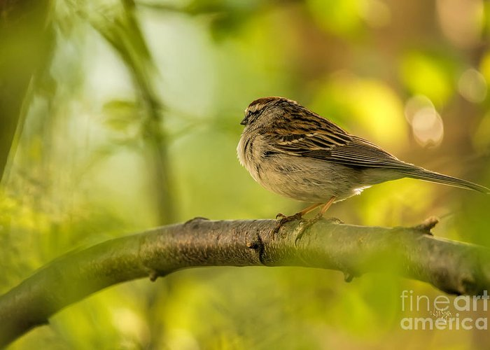 Sparrow Greeting Card featuring the photograph His Eye Is On The Sparrow by Lois Bryan
