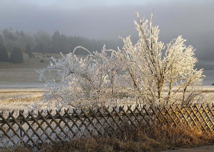 Winter Greeting Card featuring the photograph Hoarfrost In Winter by Matthias Hauser