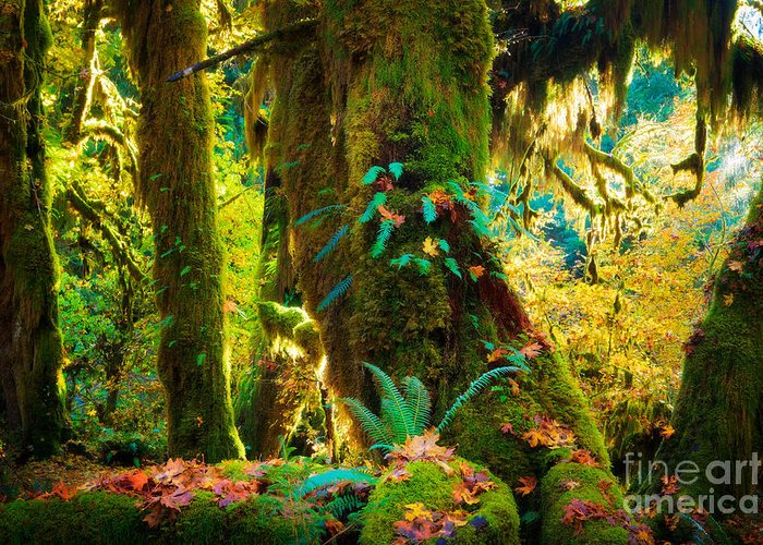 America Greeting Card featuring the photograph Hoh Grove by Inge Johnsson