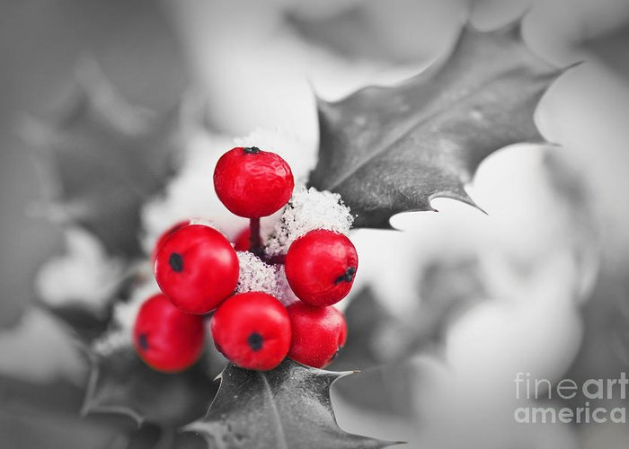 Christmas Greeting Card featuring the photograph Holly by Delphimages Photo Creations
