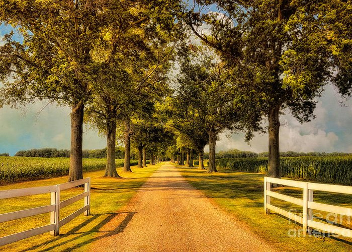 Road Greeting Card featuring the photograph Home In Time For Supper by Lois Bryan