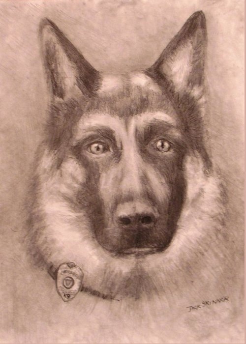 Pencil Drawing Greeting Card featuring the drawing Honor by Jack Skinner