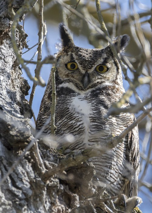 Loree Johnson Greeting Card featuring the photograph Hoo Are You by Loree Johnson