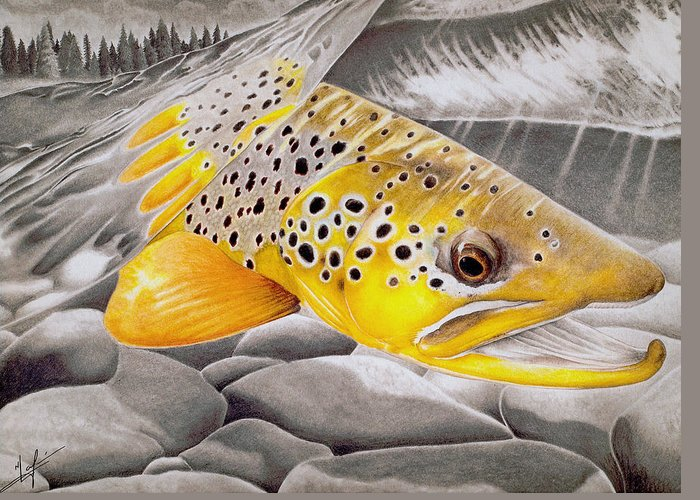 Brown Trout Drawings Greeting Cards
