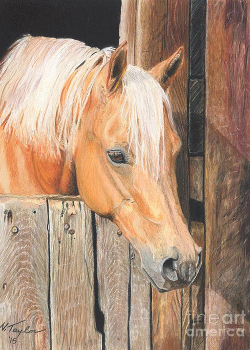 Tennessee Barn Drawings Greeting Cards