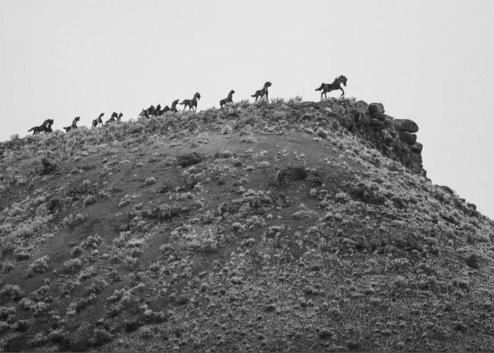 Montana Greeting Card featuring the photograph Horizon Horse by Paul Bartoszek