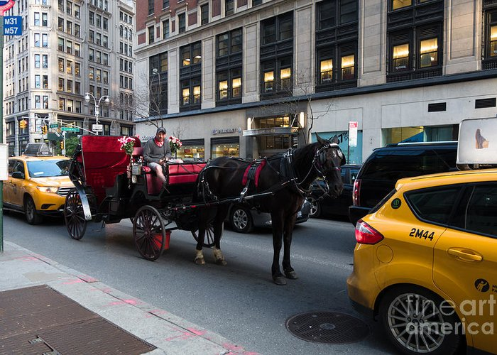 Horse And Carriage Greeting Card featuring the photograph Horse And Carriage Nyc by Amy Cicconi