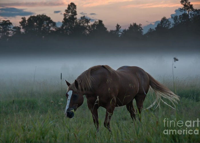 Landscape Greeting Card featuring the photograph Horse And Fog by Cheryl Baxter
