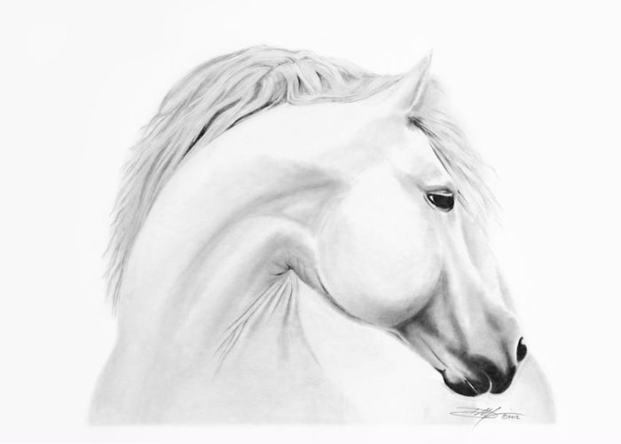 Horse Greeting Card featuring the drawing Horse by Don Medina