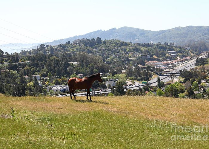 Marin Greeting Card featuring the photograph Horse Hill Mill Valley California 5d22662 by Wingsdomain Art and Photography