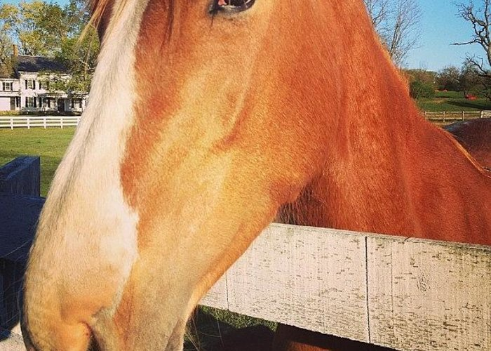 Horse Greeting Card featuring the photograph #horse #pretty #nature #wow #amazing by Amber Campanaro