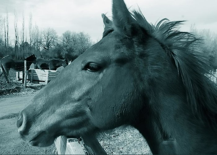 Horses Greeting Card featuring the photograph Horse Sense by Steven Milner